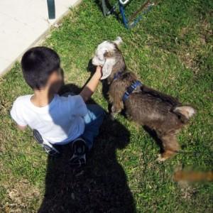 רונית שלו - טיפול באמצעות בעלי חיים